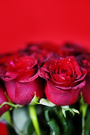 beautiful red roses on red background photo
