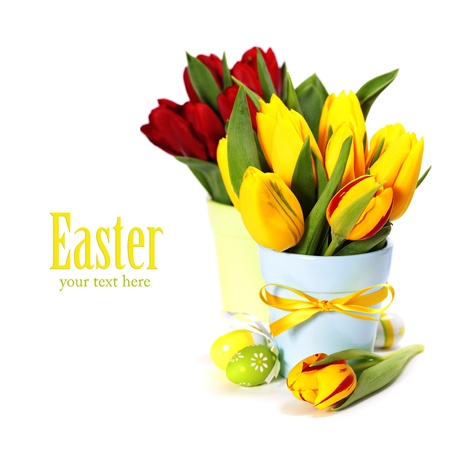 spring tulips with easter eggs  on white background  (with sample text) photo