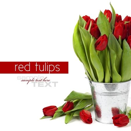 tulips isolated on white background: fresh red tulips on white background