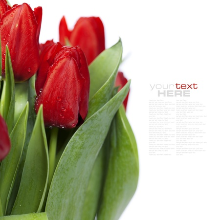 mixed flower bouquet: fresh red tulips on white background