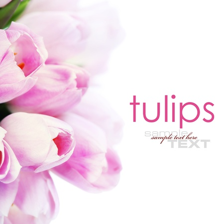 Fresh Tulip flowers isolated on white  (with easy removable text )