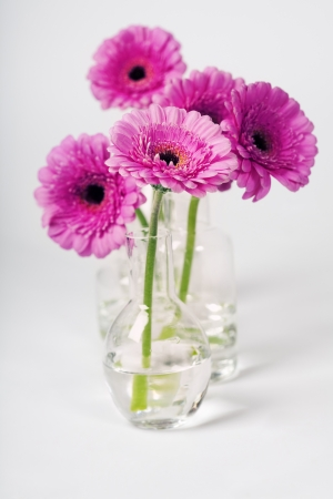 pink daisy: colorful pink daisy gerbera flowers in vases Stock Photo