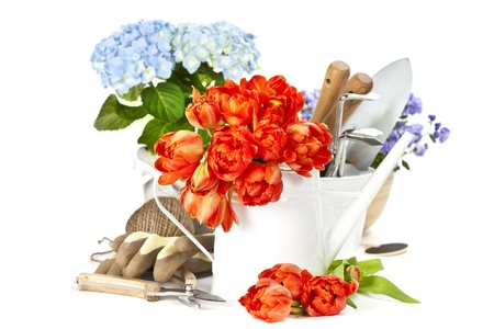 Fresh spring flowers and garden tools photo