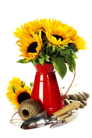 Sunflowers in a red vase and garden tools over white photo
