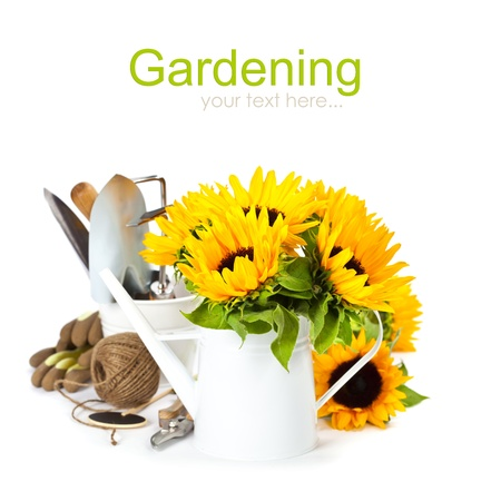 garden tool: Fresh sunflowers in white watering can and garden tools (with easy removable text)