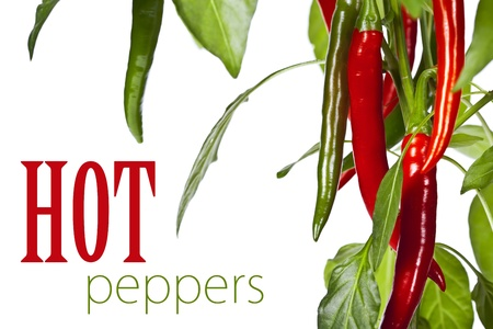 tabasco: red hot chili peppers over white (with easy removable text)
