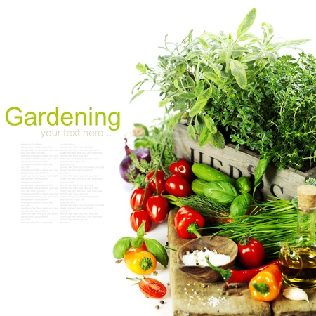 cebollin: hierbas en la caja y las verduras frescas sobre blanco Foto de archivo