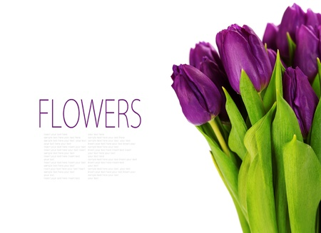 florists: bouquet of the fresh tulips on white background (with sample text)