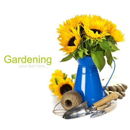 Sunflowers in a blue vase and garden tools over white  with easy removable text  photo