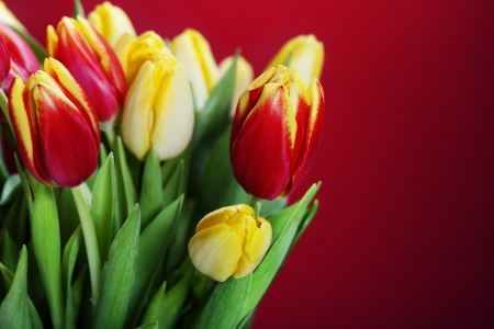 bouquet of the fresh red and yellow tulips photo