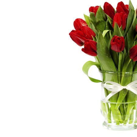 tulips in vase: fresh red tulips on white background