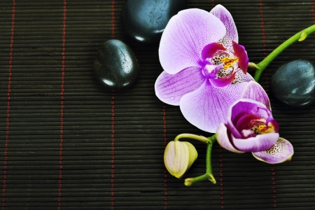 Orchid Spa Composition- Spa and healthcare concept Stock Photo - 14884920