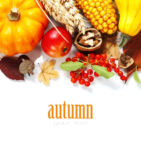 thanksgiving background: Harvested pumpkins with fall leaves, flowers and fruits over white