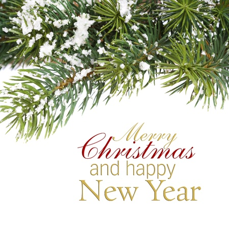 natal: branch of Christmas tree over white (with sample text)
