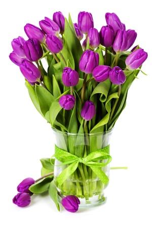 Purple tulips on white background