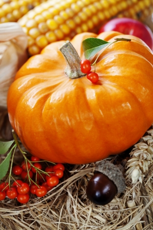 Harvested pumpkins with fall leaves and vegetables photo