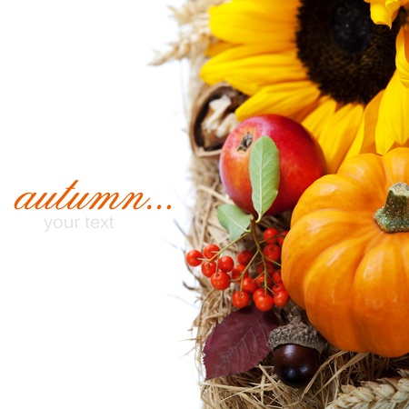 Harvested pumpkins with fall leaves, flowers and fruits over white photo