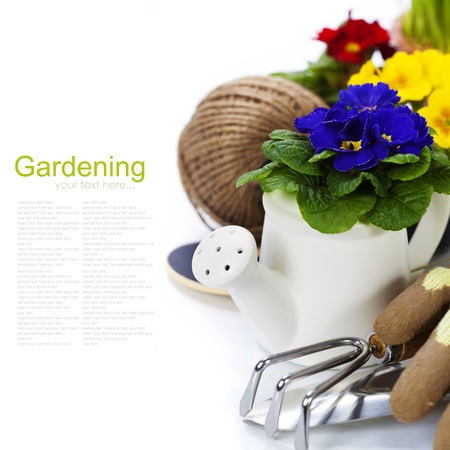 Fresh primulas and garden tools over white  with easy removable sample text  photo