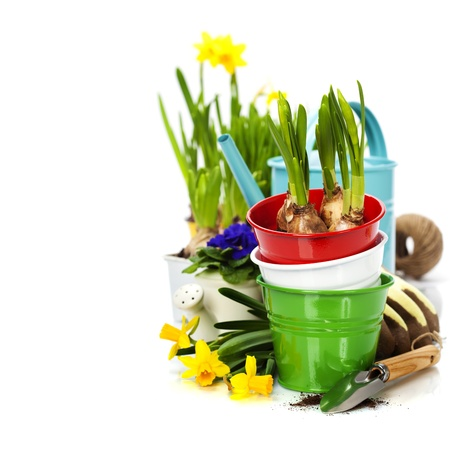 primulas: Spring flowers and garden tools  isolated on white