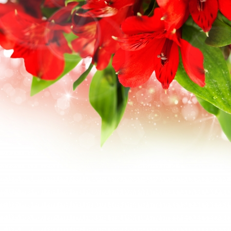 Flowers background with fresh red flowers