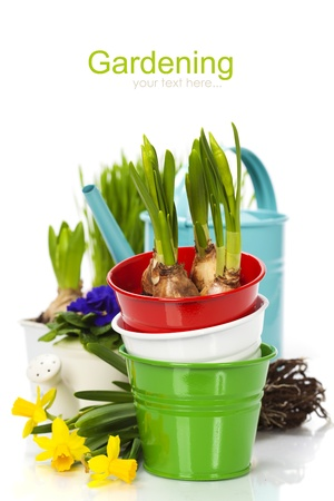 Spring flowers and garden tools  isolated on white (with easy removable sample text) photo