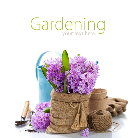 Beautiful Hyacinths in vase and garden tools over white (with easy removable sample text) photo