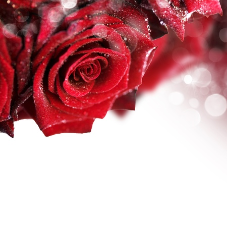 soft center: red roses with water droplets on white background