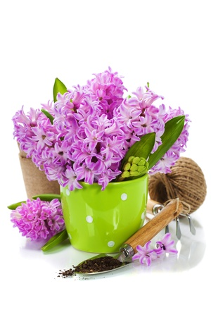 Beautiful Hyacinths in vase and garden tools over white photo