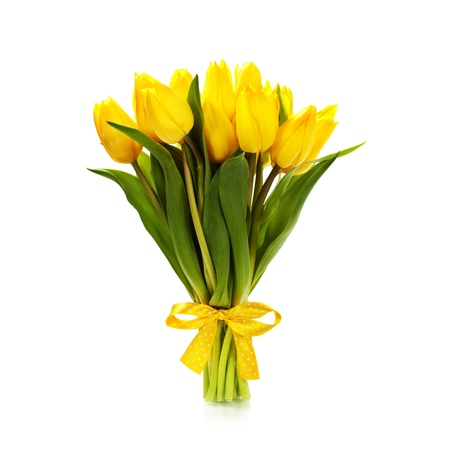stalk flowers: Beautiful yellow tulips over white