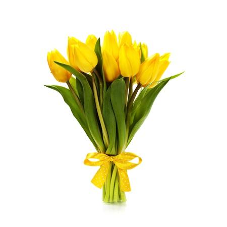 bulb tulip: Beautiful yellow tulips over white