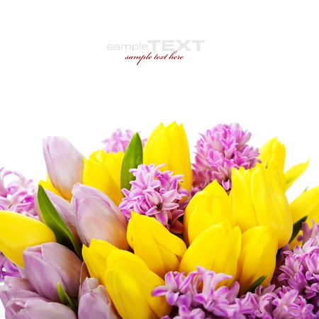 flower bulb: Beautiful spring flowers  over white (with easy removable sample text) Stock Photo