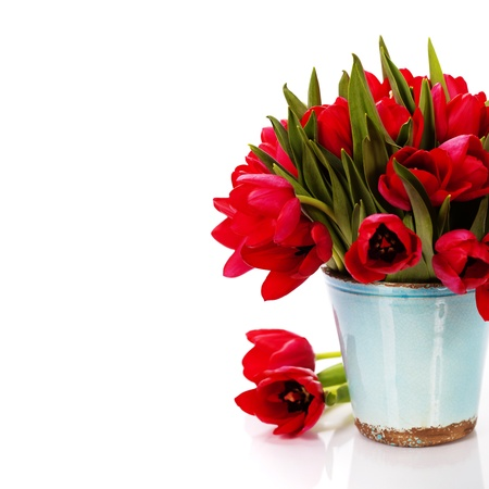 tulips in vase: beautiful red tulips  isolated on white background