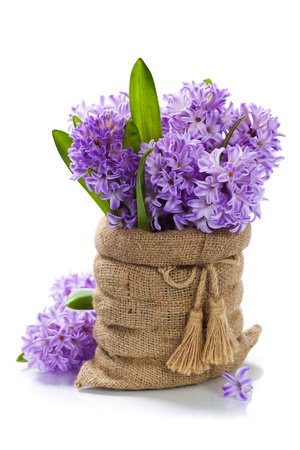 hyacinths: Beautiful Hyacinths in vase over white Stock Photo