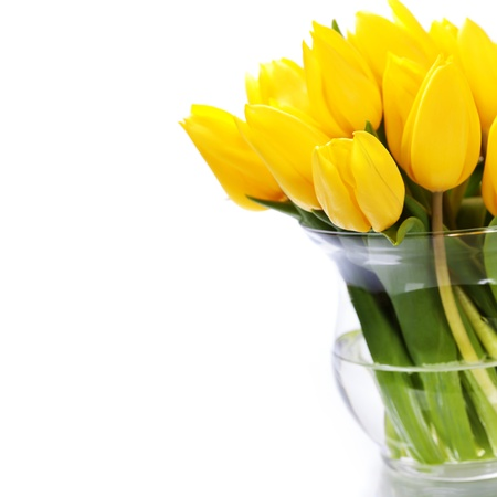 Beautiful yellow tulips over white photo