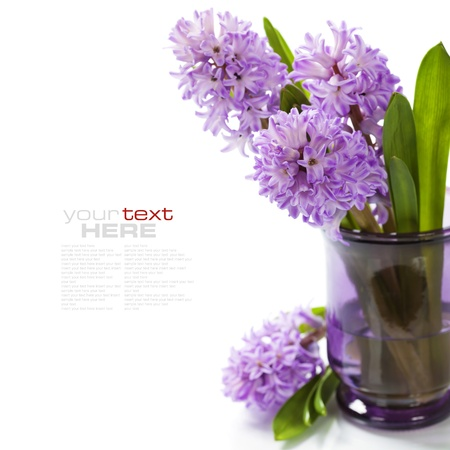 Beautiful Hyacinths in vase over white (with easy removable sample text) photo