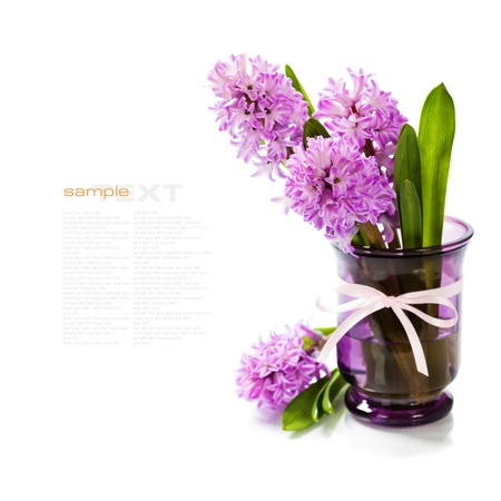 Beautiful Hyacinths in vase over white(with easy removable sample text) photo