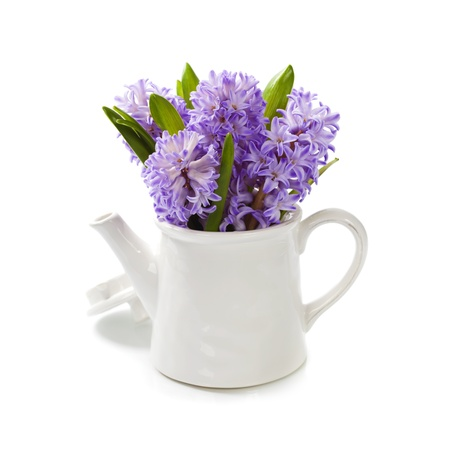 Beautiful Hyacinths in vase over white photo