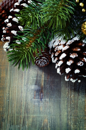 festive pine cones: Branch of Christmas tree and cones