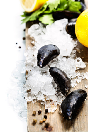 Fresh  mussels on ice ready for cooking  photo