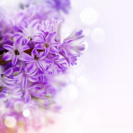 (簡単なリムーバブル サンプル テキスト) と白で美しいピンクのヒヤシンス 写真素材