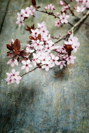 Spring blossom on rustic wooden table photo