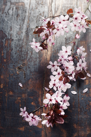 blossom tree: Spring blossom on rustic wooden table