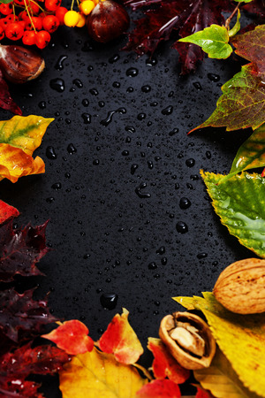 space for copy: Fall leaves for an autumn composition with copy space Stock Photo