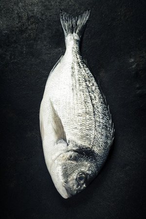 gilthead: Delicious fresh fish on dark vintage background