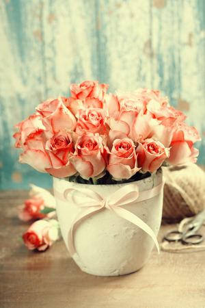 fresh pot: Pink roses in a pot on blue background