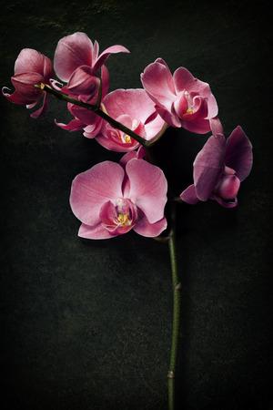 暗いヴィンテージ背景にピンクの蘭