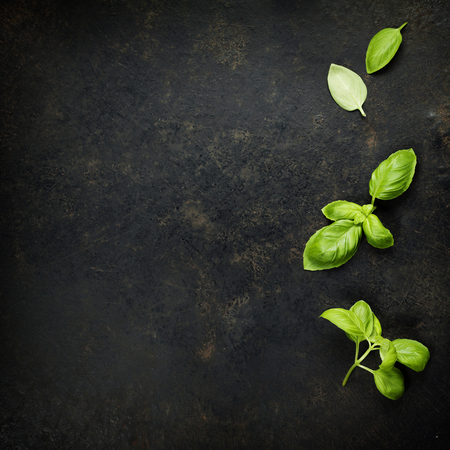 black stone: Basil leaves on darc rustic background. Background layout with free text space.
