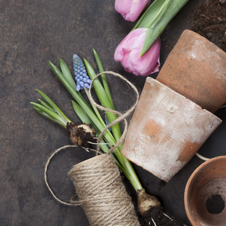 replanting: Garden tools on vintage background with space for text - Spring or Gardening Background Stock Photo