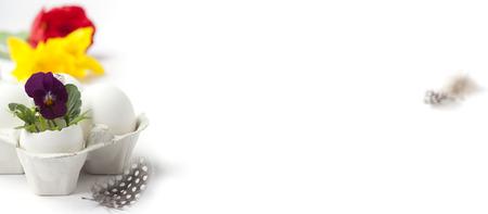 Easter egg in birds nest with spring flowers on white background Stockfoto