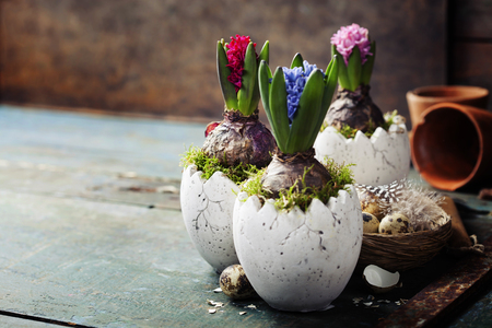 Hyacinth flowers, garden tools and easter eggs on rustic background Stock Photo